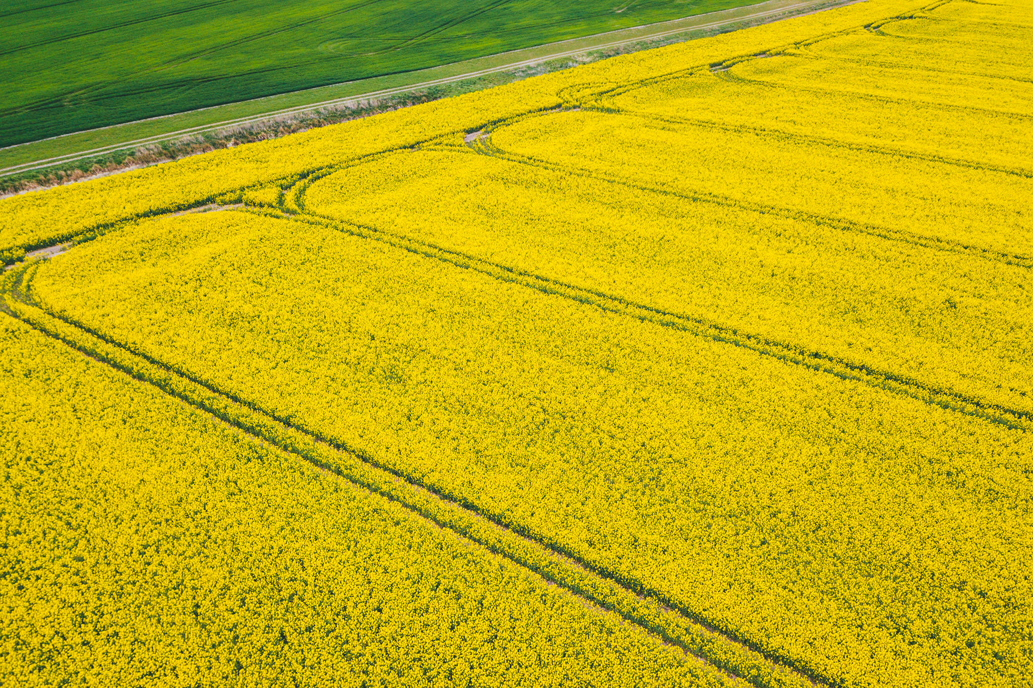Tire track pattern in canola field
