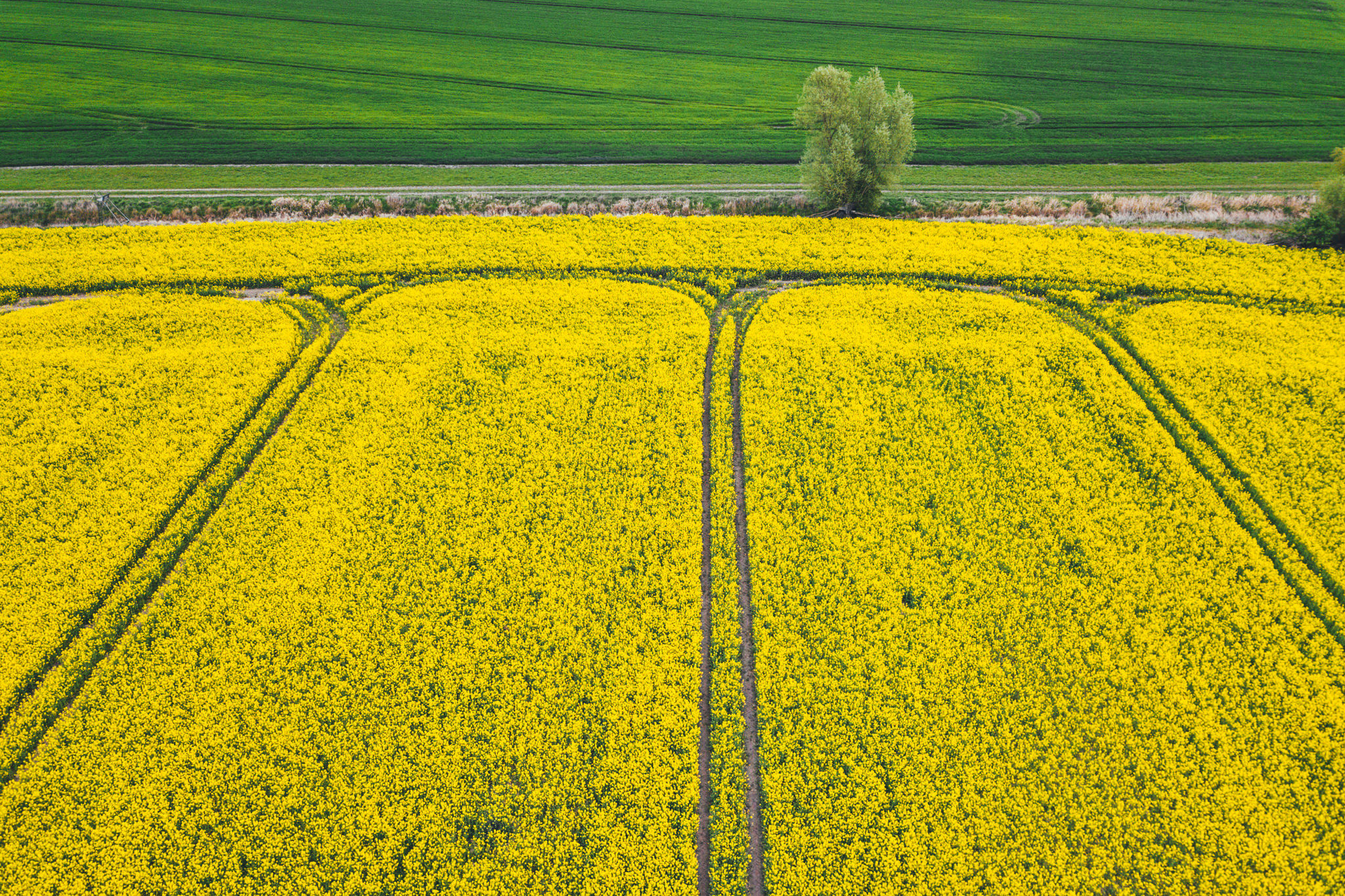 Abstract landscape view of rapeseed flowers